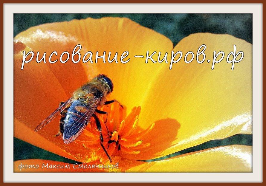 пчеловодство киров